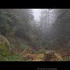 Det er magisk i skogen når det regner
