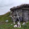 Kolvelægeret - Hardangervidda
